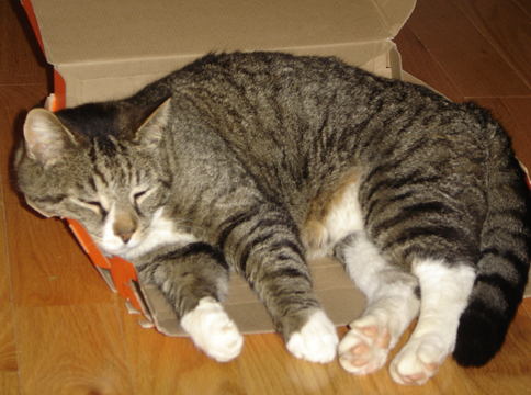cat kidney failure when to euthanize