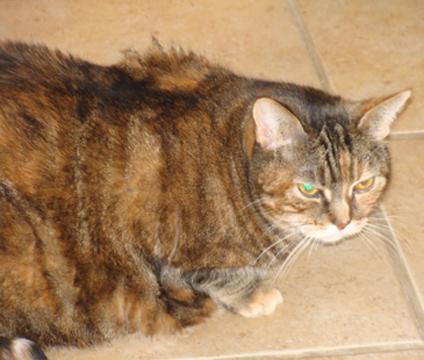 Cats Eyes Road >> Cat Finders » orange tabby
