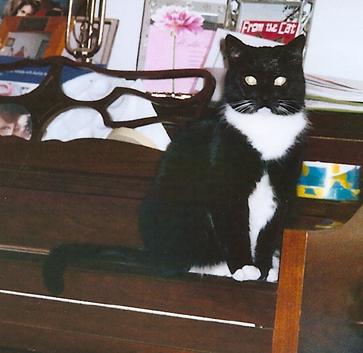 Cat Finders 187 Tuxedo