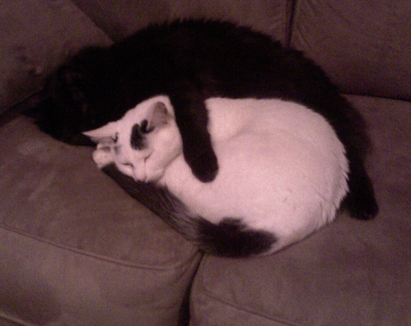 Cat Finders Blog Archive Lost White And Black Cat Alexandria