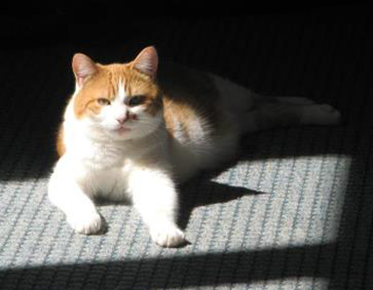 Cats Eyes Road >> Cat Finders » orange and white
