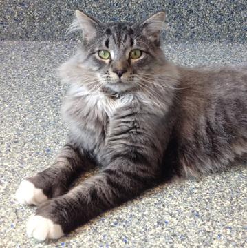 Cat Rescue Bedford
