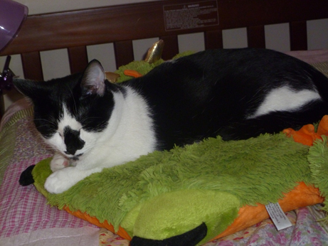 Cat Finders 187 Blog Archive 187 Lost Black And White Cat