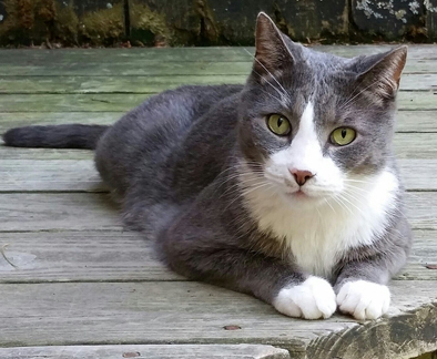 Cat Finders » tuxedo